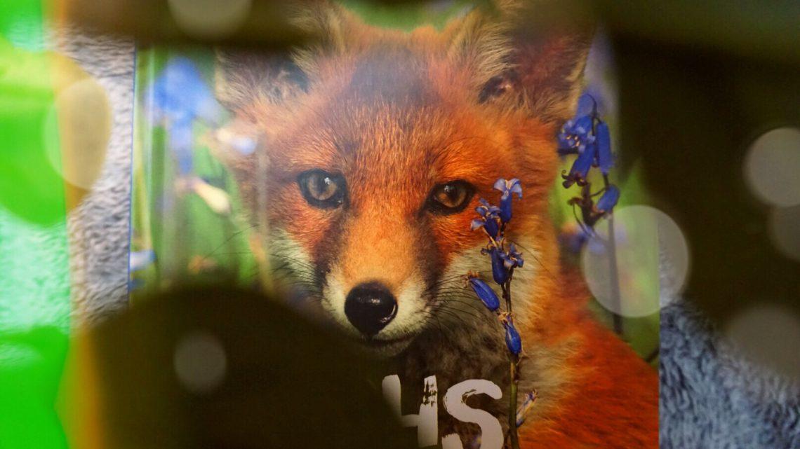 So lebt der Fuchs – Eine Bilderreise durch den Wald